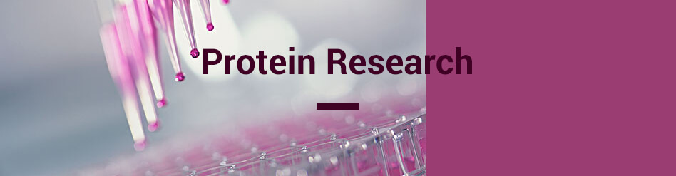 Protein Research