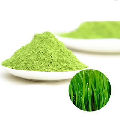 Barley Grass Juice Powder Food Grade