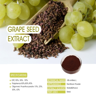 Grape Seed Extract 90% Fine Red brown powder  Finutra Biotech Co., Ltd